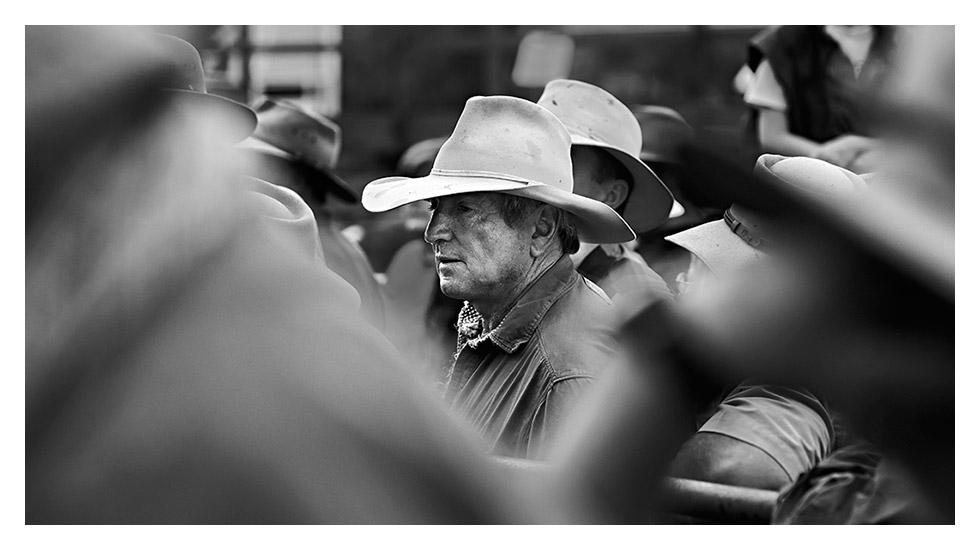 Cattleyards Hero