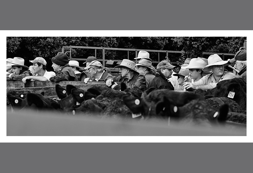 LAST OF THE CATTLE SALES01