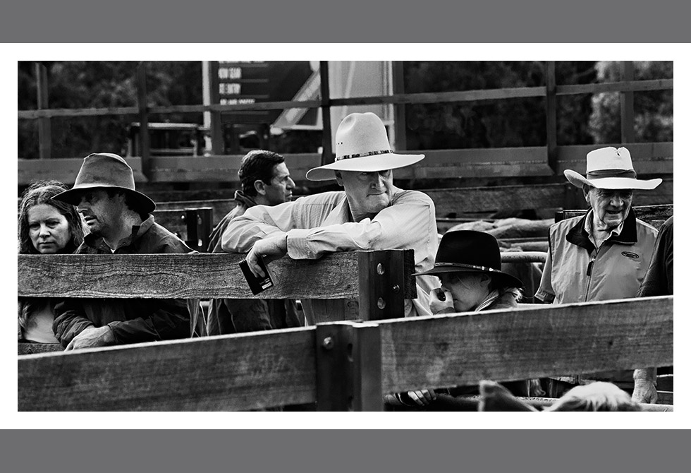 LAST OF THE CATTLE SALES05